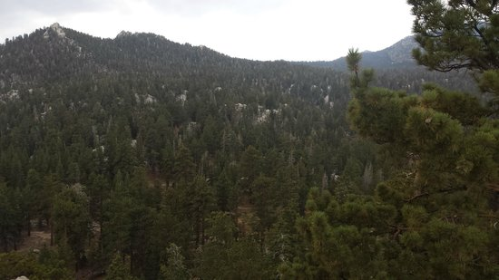 Mount San Jacinto State Park and Wilderness: Pine everywhere
