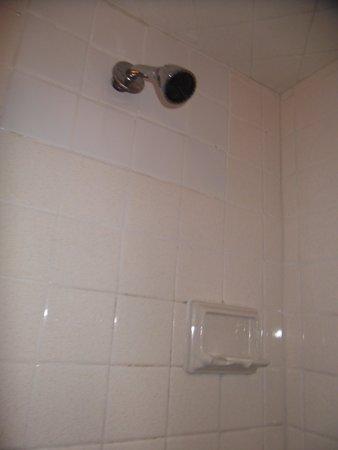 Beach View Inn : showerhead and soap dish