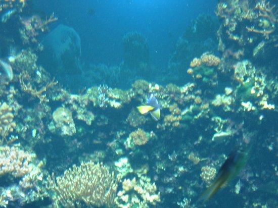 Aquarium de la Réunion : peces