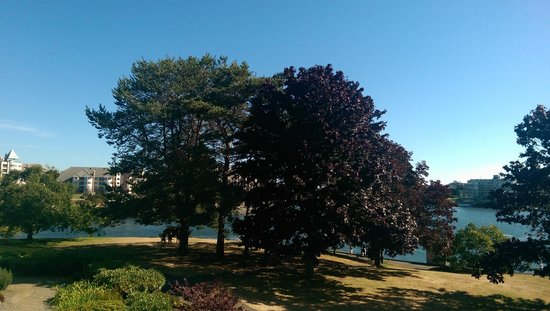 Inn at Laurel Point : View from room
