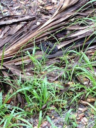 Hontoon Island State Park: snake on the trail
