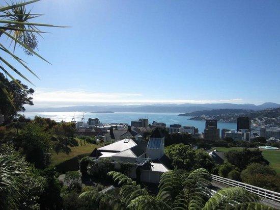 Wellington Botanic Garden: And some more