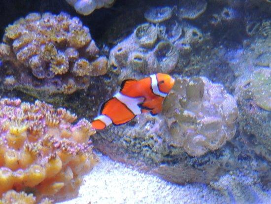 Shedd Aquarium : Nemo