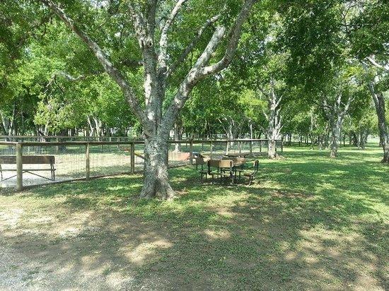 San Antonio KOA Campground: Seating provided outside camp k9