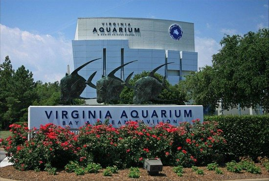 Candlewood Suites Virginia Beach / Norfolk: Hotel is a short drive to the Virginia Aquarium