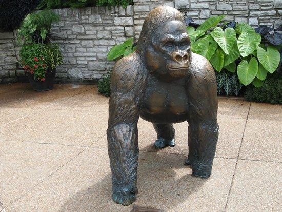 """St. Louis Zoo: """"He followed me home. Can I keep him?"""""""