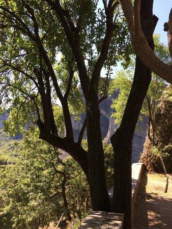 Agios Nikolaos Anapaphsas: Дерево при супске/подъеме в монастырь