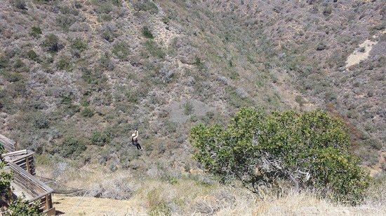 Catalina Expeditions  Tours: Zip lining
