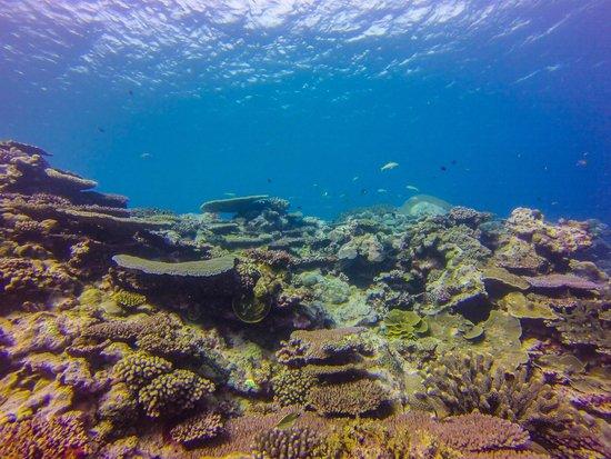 Waidroka Bay Resort: Reef