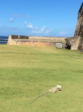 Castillo de San Cristobal: a lizard friend who came to visit