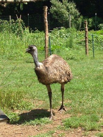 Fantastic Umbrella Factory: Emu!