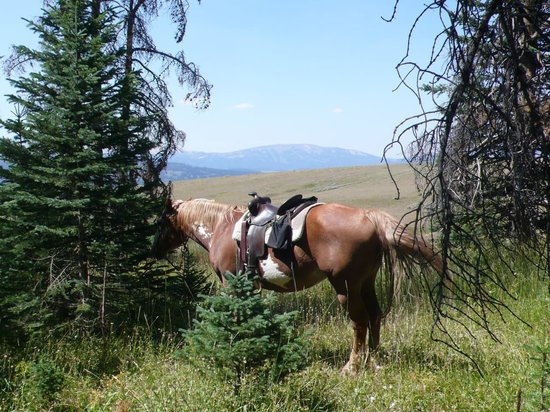Elkhorn Ranch : Breaking for lunch on an all day ride up to Sheepherder Springs