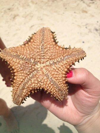 Grand Case Beach Club: starfish we found when snorkeling