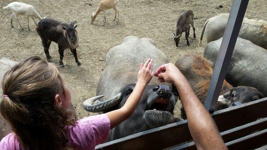 Wagon Trails Animal Park: Feeding the animals ��