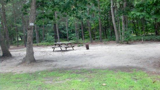 Ponderosa Campground: tent site