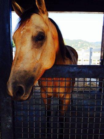 Tamber Bey Vineyards: Horse at Tamber Bey