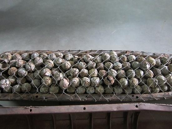 UXO Lao Visitors Centre : クラスター爆弾。野球のボールと間違って触れるのではと思うと、怖ろしい。