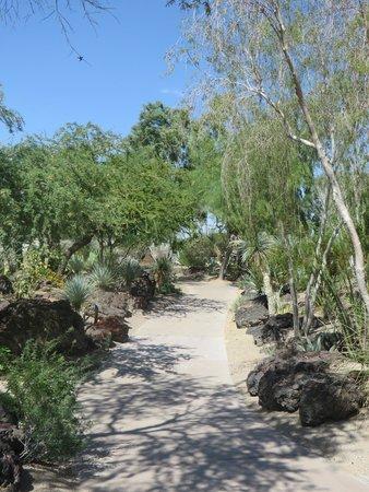 Ethel M Chocolates Factory and Cactus Garden: Beautiful Cactus Garden