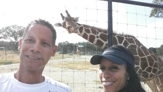 Hotel Valencia Riverwalk: Photo bombed by a giraffe