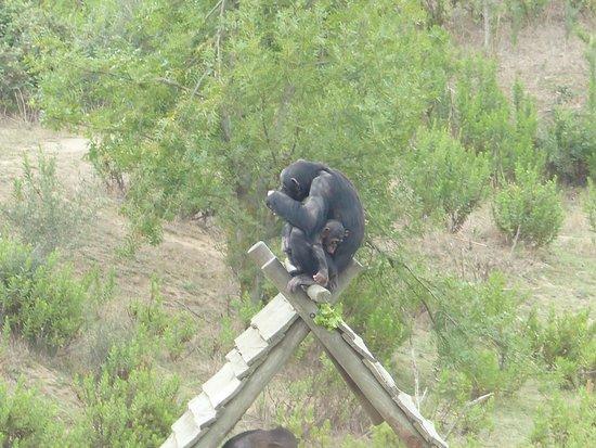 Reserve Africaine de Sigean: Trop peu de joie !