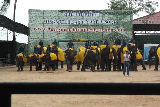 Nong Nooch Tropical Botanical Garden: Elephant Show