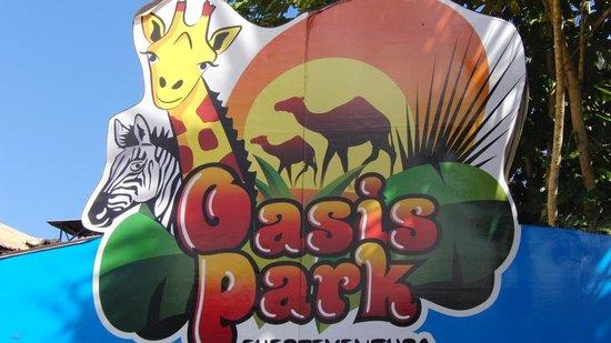 Oasis Park Picture Of Club Jandia Princess Playa De Jandia Tripadvisor