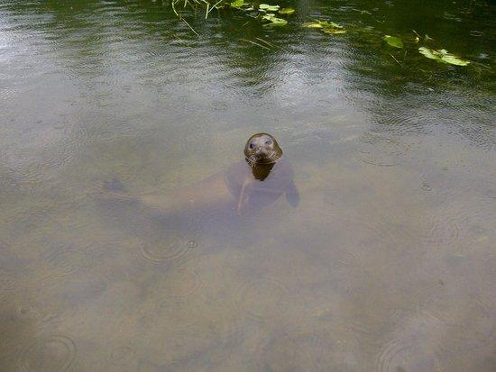 Quiet Waters Caravan Park: new visitor!!