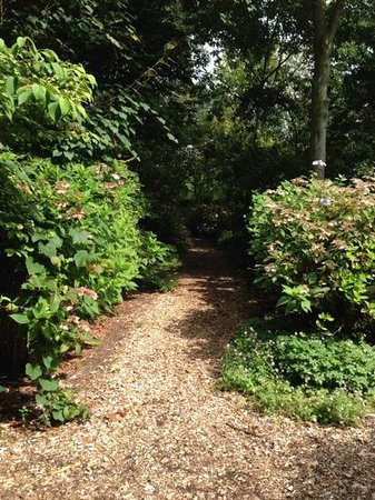 East Ruston Old Vicarage Garden: enticing paths lead you off to.....
