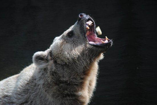 Parc Zoologique de Fort Mardyck : le goûter des ours