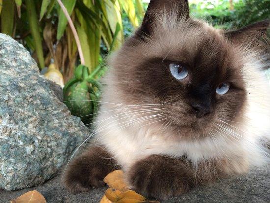 Vallecalle, Frankrike: Notre copain le chat!