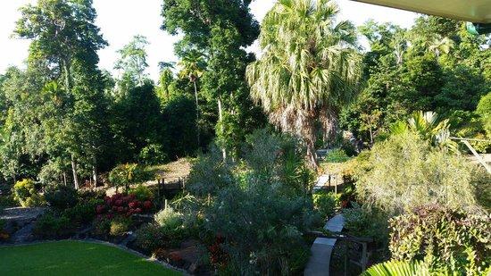 Licuala Lodge: Garden