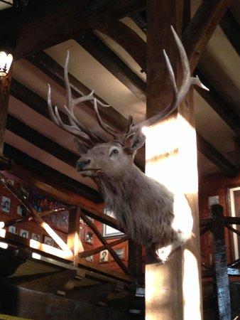 El Rancho Hotel & Motel: Poor animal!