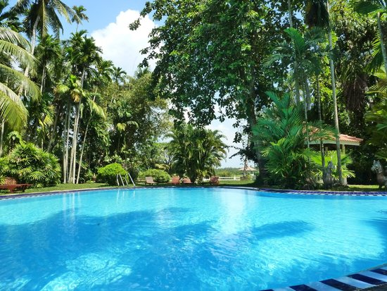 Ayubowan Swiss Lanka Bungalow Resort: Pool View