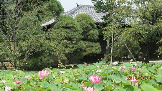 Toyama Memorial Museum of Art: 長屋門と蓮