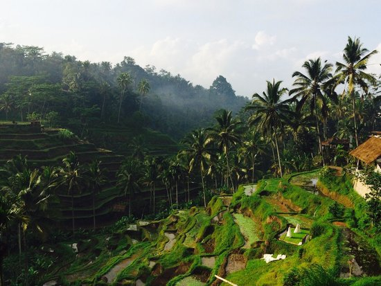 Tegalalang Rice Terrace: Tegalalang - still pretty even when terraces are bare