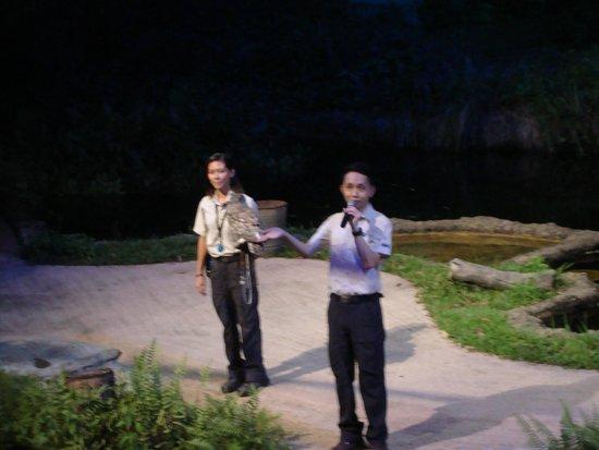 Night Safari Show