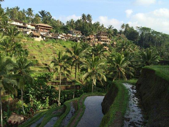 Tegalalang Rice Terrace: Tegalalang - looking towards main street