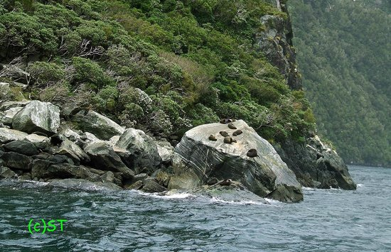 Milford Sound : SEAL
