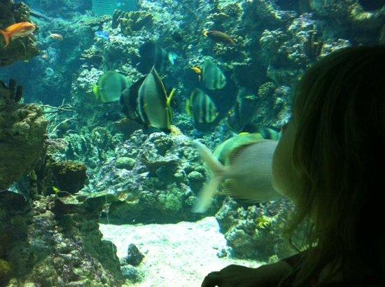 Aquarium Mare Nostrum : admirando los peces