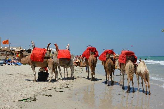 SENTIDO Djerba Beach: plage