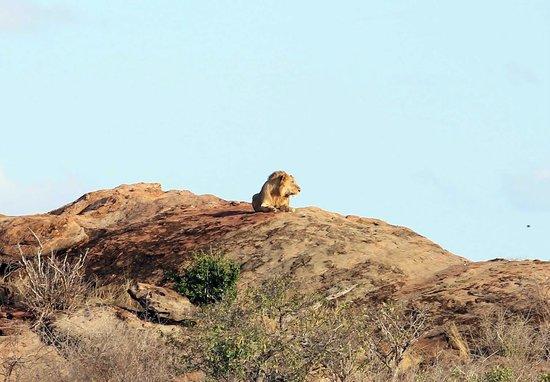 Tsavo East: Leone