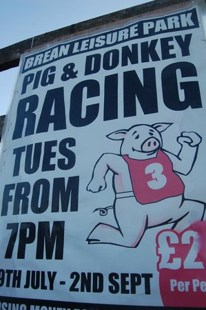 Brean Down: Race your pigs and donkeys here :)