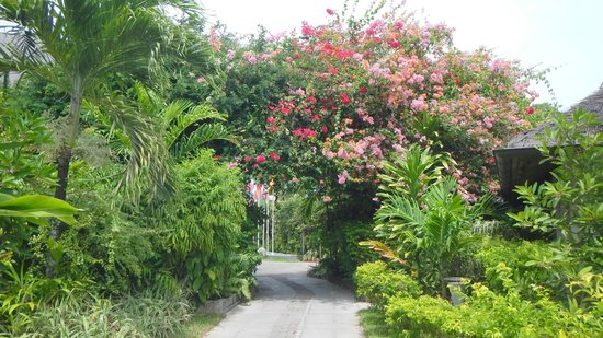 La Digue Island Lodge : Giardino