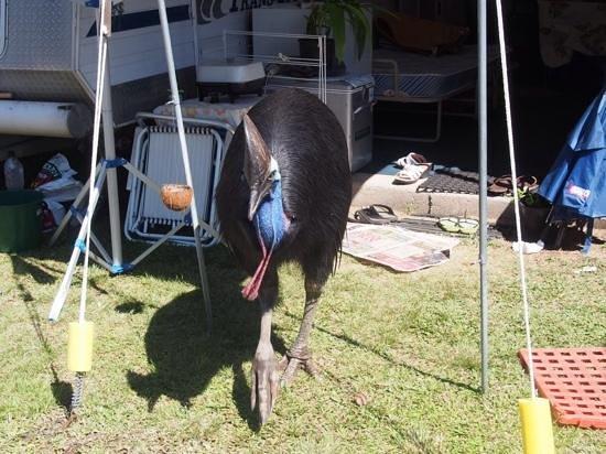 Beachcomber Coconut Holiday Park: our new neighbour!