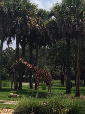 Disney's Animal Kingdom Villas - Kidani Village: Savannah