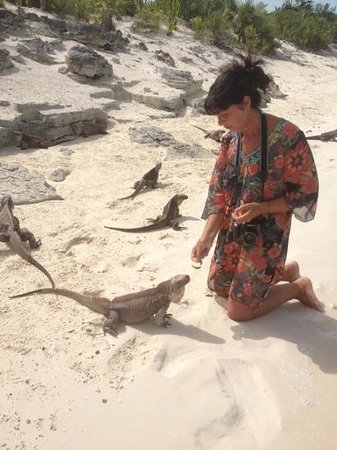 Paradise Bay Bahamas : les iguanes