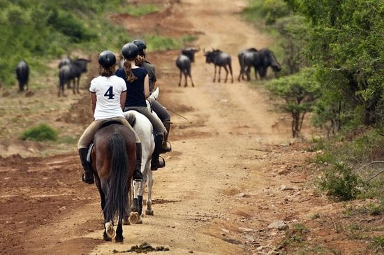 Pakamisa Private Game Reserve: Horse riding in the game reserve