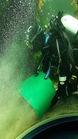 Macduff Marine Aquarium: Marine Aquarium Cleaning the Kelp Reef