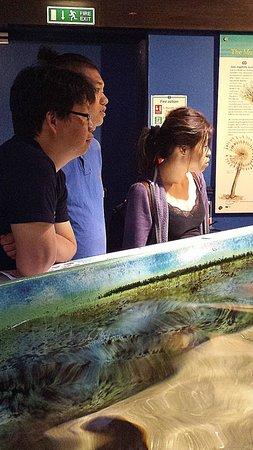 Macduff Marine Aquarium: Visitors listening to the talk
