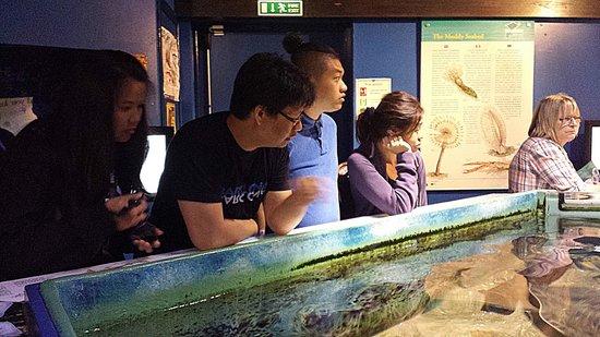 Macduff Marine Aquarium: At the Feeding Pond